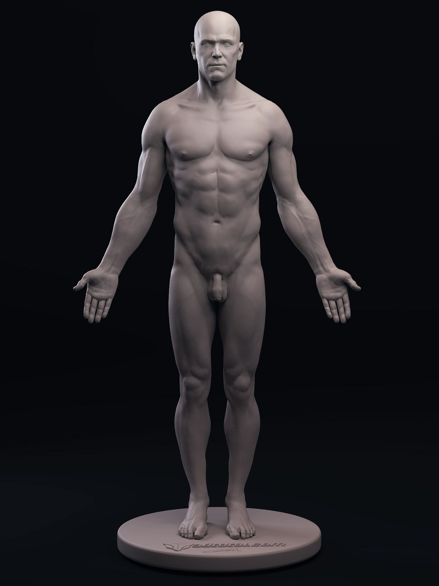 3D male figure, front view — anatomy references for artists ...