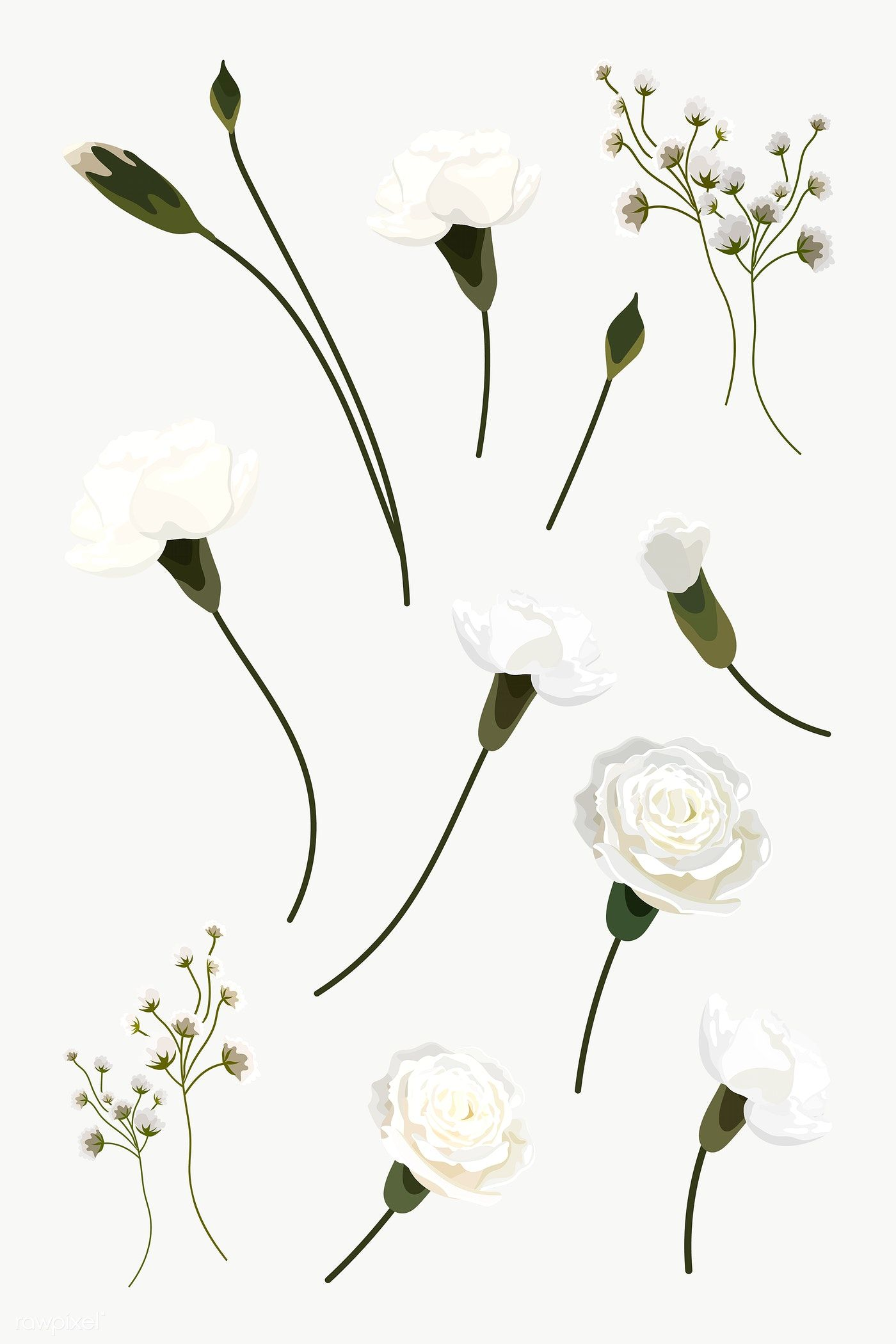 White Flowers Design Resource Collection Transparent Png Free Image By Rawpixel Com Aew In 2020 White Flower Png White Flowers Flower Illustration