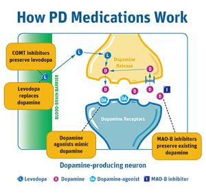 """parkinsons disease and medical treatment options essay (dr culebras of suny upstate medical university at syracuse received an  honorarium  description of the illness in his 1817 monograph, """"an essay on the  shaking palsy"""" he correctly noted that the motoric symptoms of parkinson  disease, such as  disease, looking at both the potential etiologies and treatment  options."""