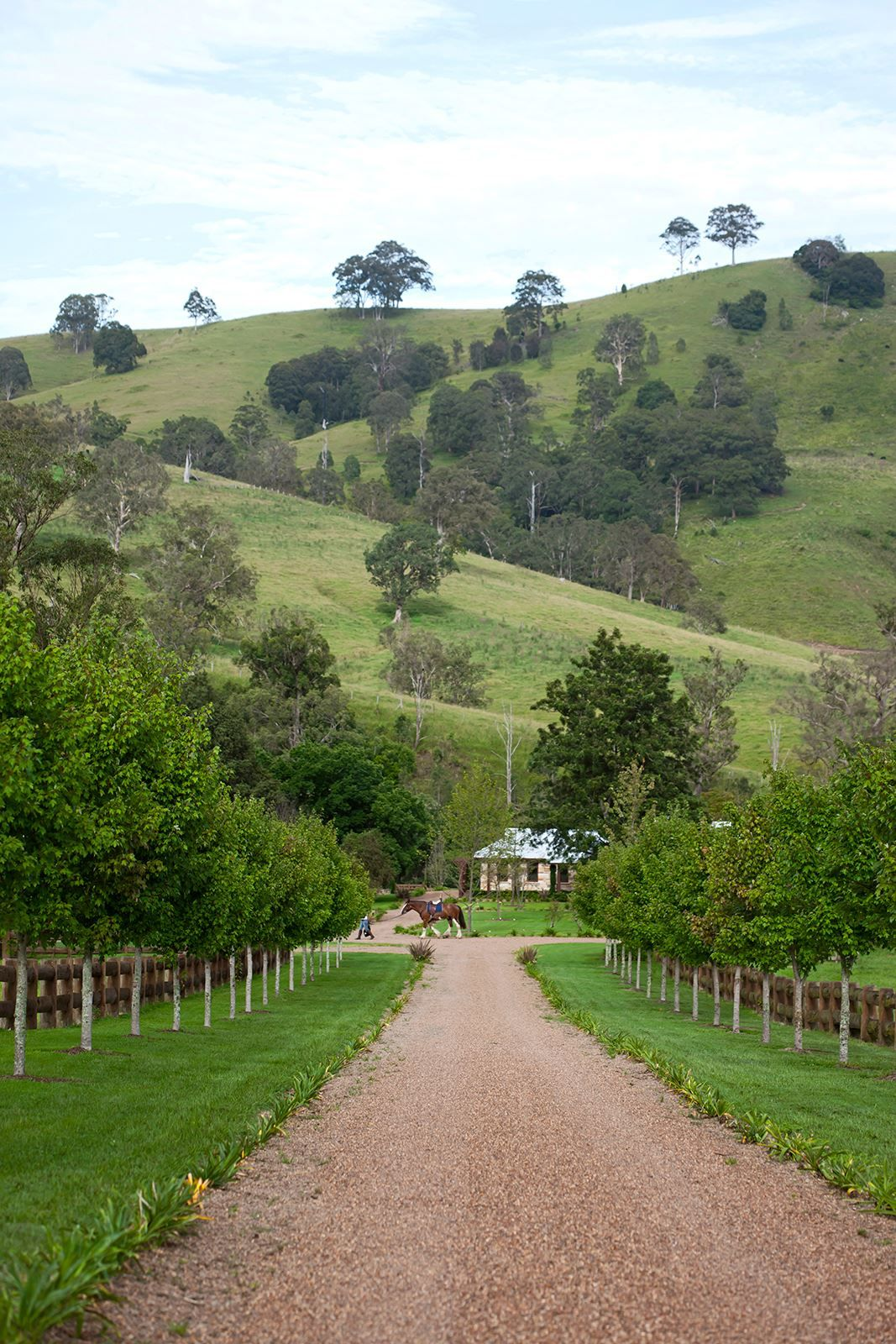 Idyllic Rural Lifestyle On Hunter Valley Property