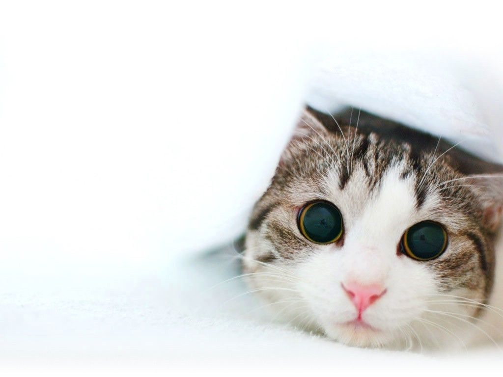 cute cat wallpapers android apps on google play | hd wallpapers
