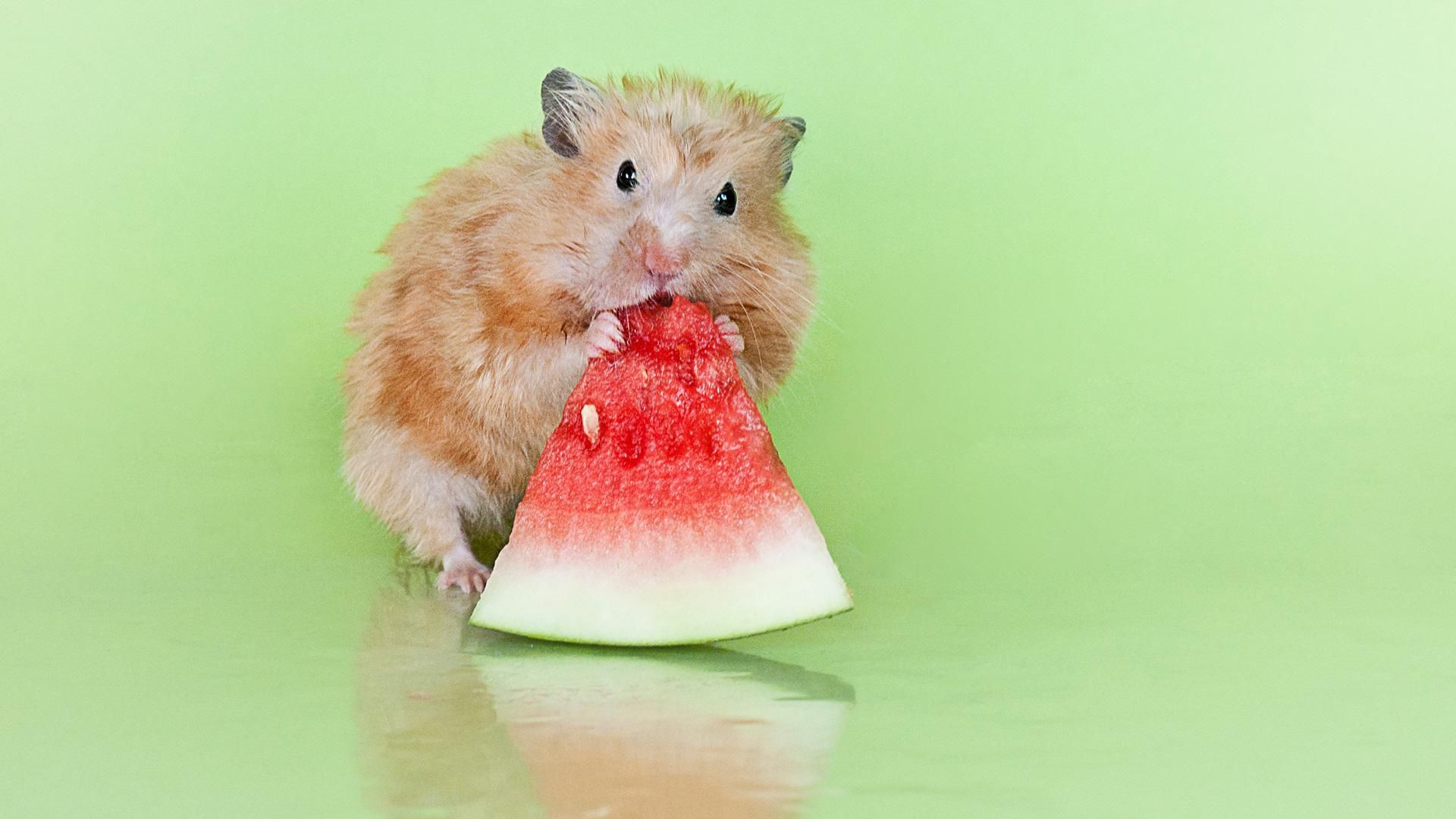16 Pictures of Animals Eating Fruit. Animal eating, Cute