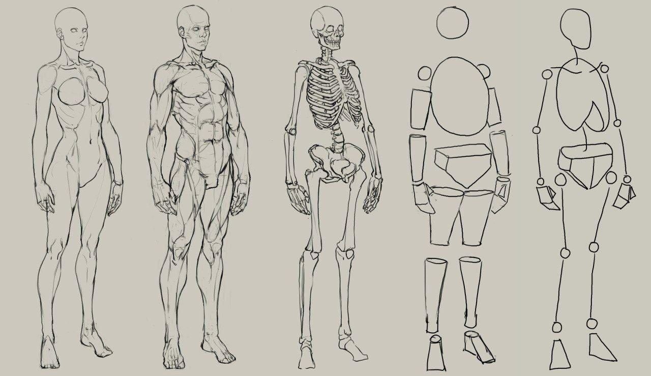 Новости | рисунок | Pinterest | Anatomy, Face proportions and ...