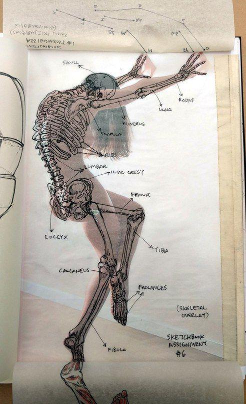 Pin de patrice kirkinis en Art class | Pinterest | Anatomía, Huesos ...