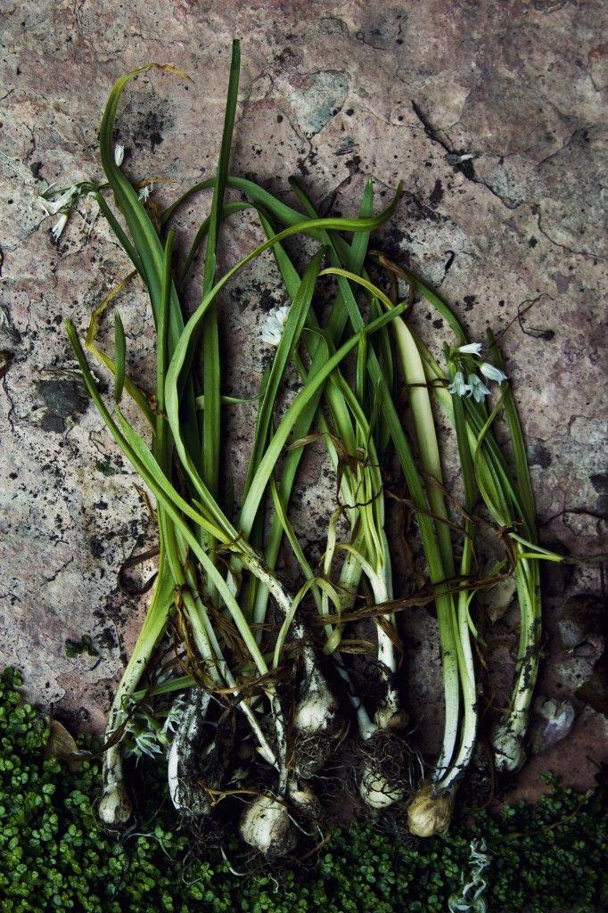 Wild Onion & Stinging Nettle Soup - Princess Tofu