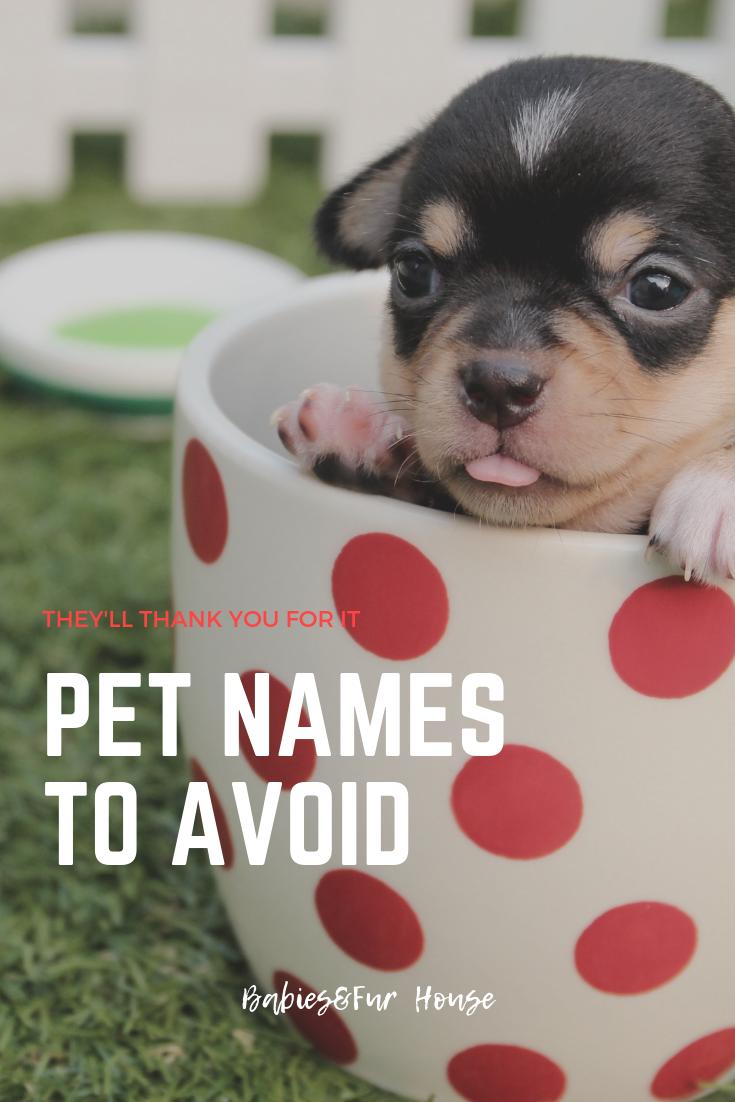 Pet Names To Avoid Pet Names Pets Kitten Care
