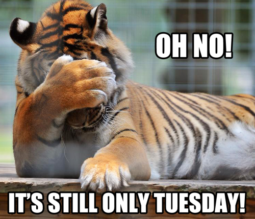 Oh, no Library memes, Tuesday quotes, Tiger