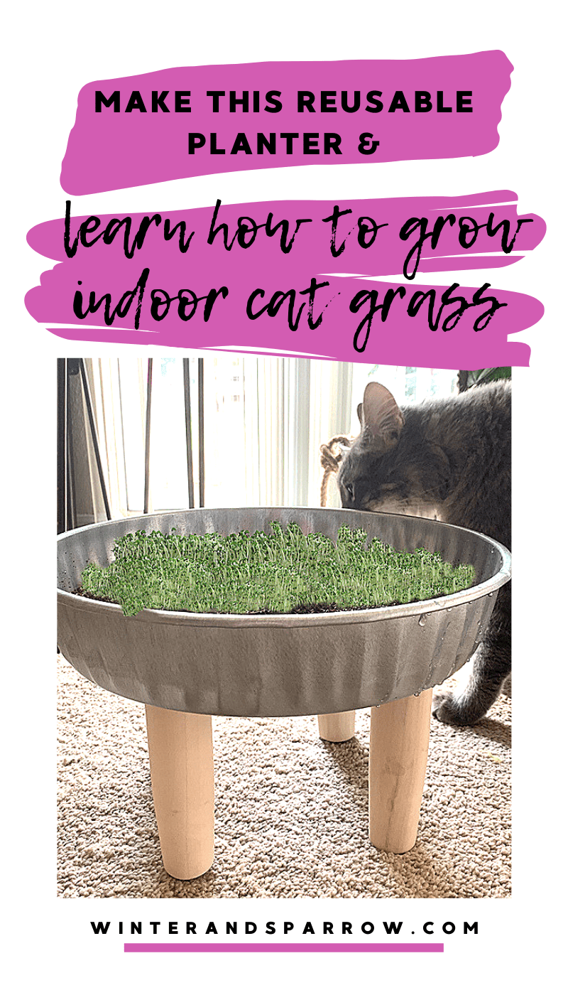 How To Grow Indoor Grass For Cats + DIY Grass Planter in
