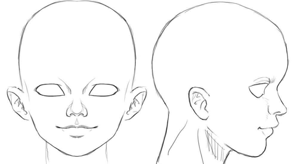 Ortho Head Reference Art Character Modeling Character Model Sheet