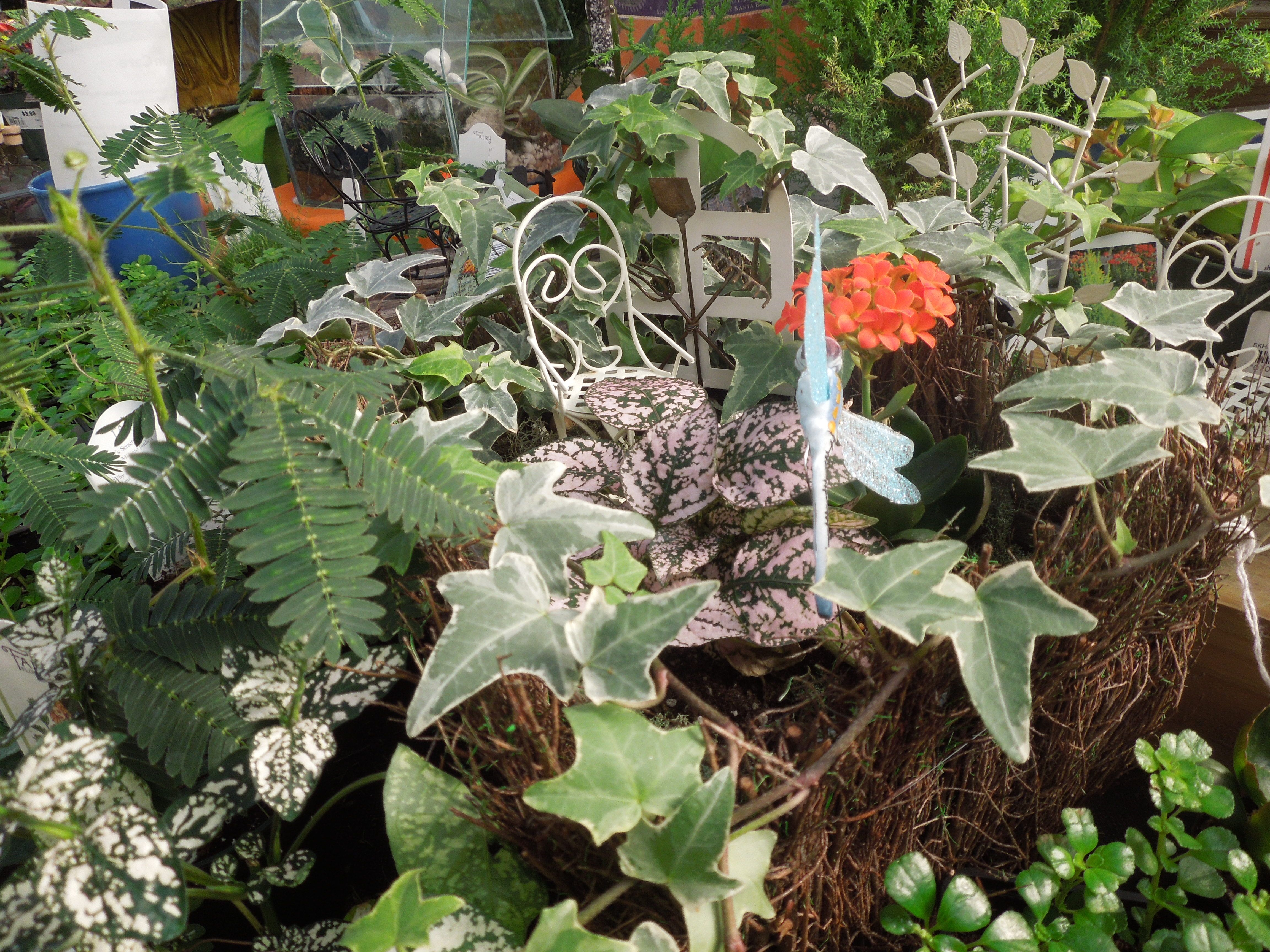 A Fairy Garden Design By Stauffers Of Kissel Hill Garden Centers (http://