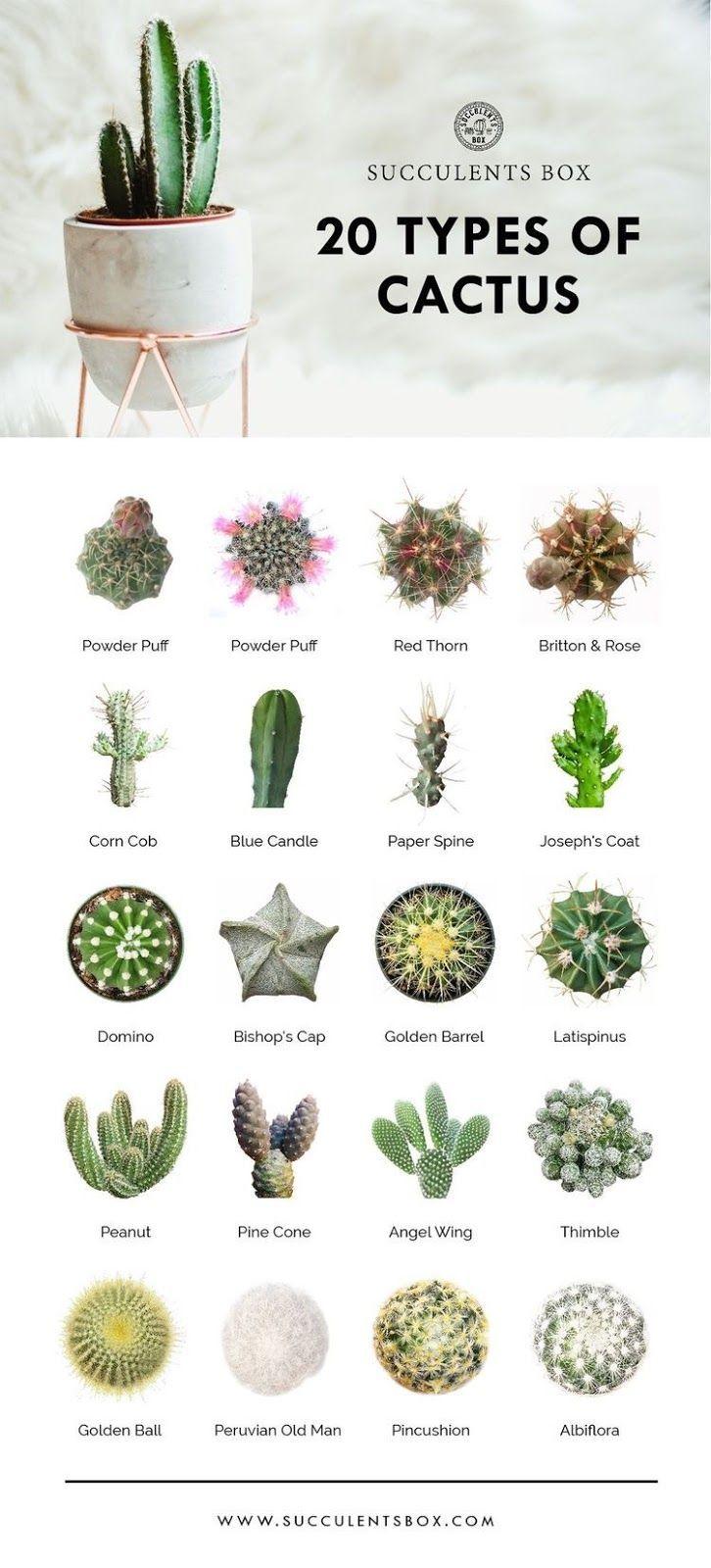 Cactus Plants Botanica Biologia In 2020 Types Of Cactus Plants