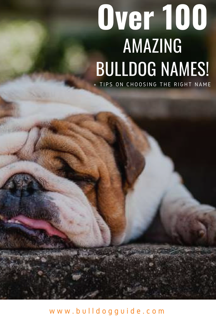 over 100 amazing bulldog names + tips on choosing the right name
