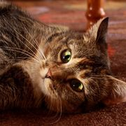 Properties Homemade cat piss neutralizer valuable