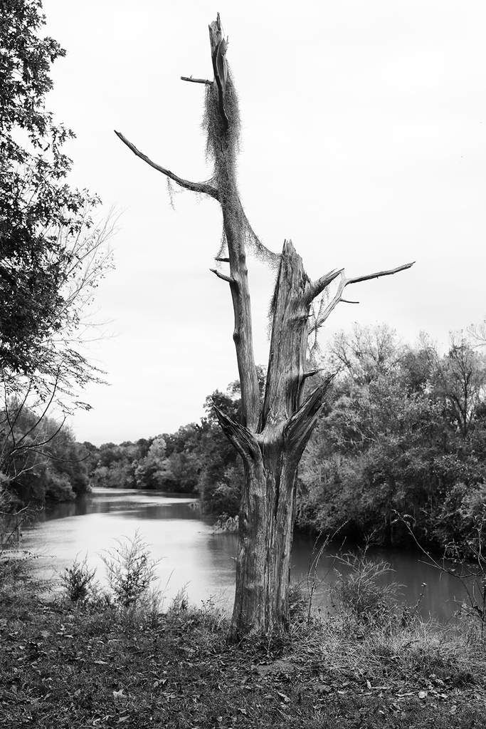 Old Tree With A River View Black And White Landscape Photograph Black And White Landscape Mountain Landscape Photography Landscape Photography