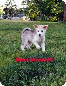Livonia Mi Husky Mix Meet D23 Litter Stormy A Puppy For Adoption Puppy Adoption Kitten Adoption Husky Mix