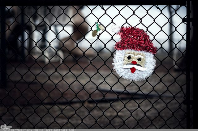 "Picture-A-Day (PAD n.1618) ""Playground Santa"" ~Amy, DangRabbit Photography"