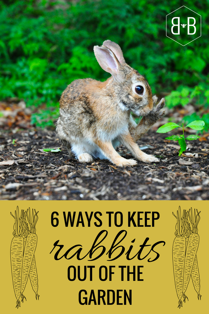 I have spent my fair share of time chasing rabbits out of my garden  Trying a few of these this growing season! organicgardening gardening pestcontrol organicpestcontrol rabbits howto article tips bunnies animals raisedbeds fence vegetables food is part of Rabbit garden -