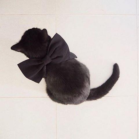 ¡Todos necesitan su disfraz de Halloween! Comparte el tuyo y gana 250€ en compras  #sustoasos (RG @margauxdaisy)