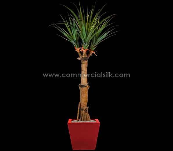Dracaena Dragon Tree Is A Versatile Tree Similar To Dracaena Marginata Http Www Commercialsilk Com Artificial Ca Dragon Tree Artificial Cactus Fake Palm Tree