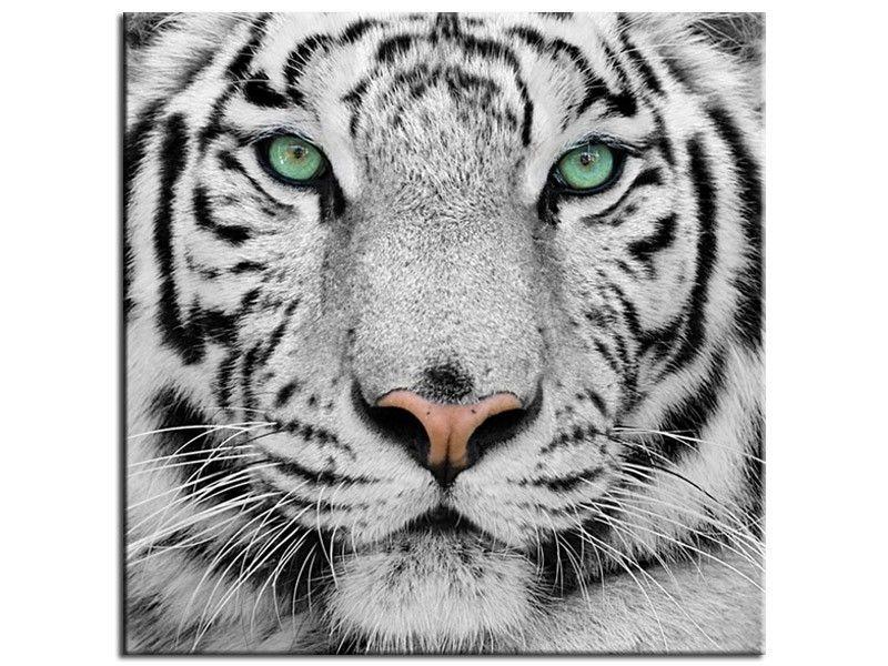 tableau design t te de tigre de sumatra animaux and paintings