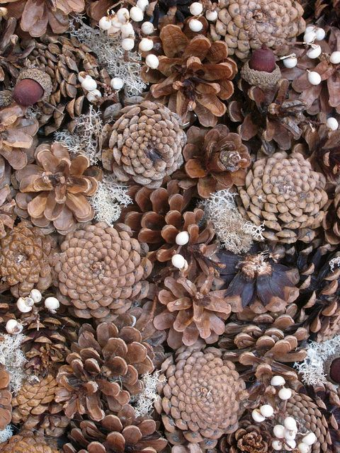 Pinecone Wreath ~ Eden Picture Photography
