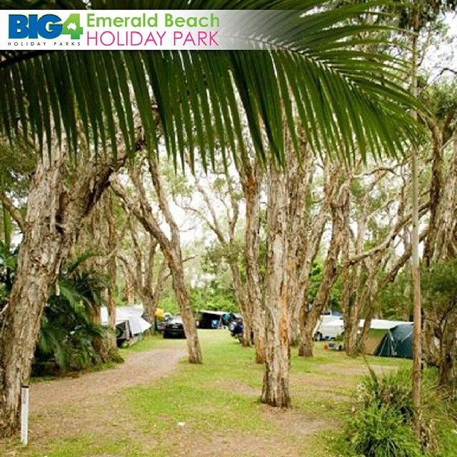 Reservations for your #BIG4 accommodations Click Here:   #EBHP #EmeraldBeach #HolidayParks #BIG4 #CoffsHarbour #CoffsCoast #CaravanPark EmeraldBeachHoliday	 Web 	 Facebook http://www.facebook.com/emeraldbeachhp	 Twitter http://twitter.com/emeraldbeachhp	 Pinterest http://www.pinterest.com/EmeraldBeachAU	 Instagram http://instagram.com/big4emeraldbeach