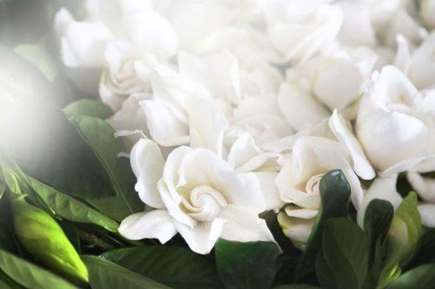 Discover Beautiful Flowers Garden Luxury Flowers Flower Subscription