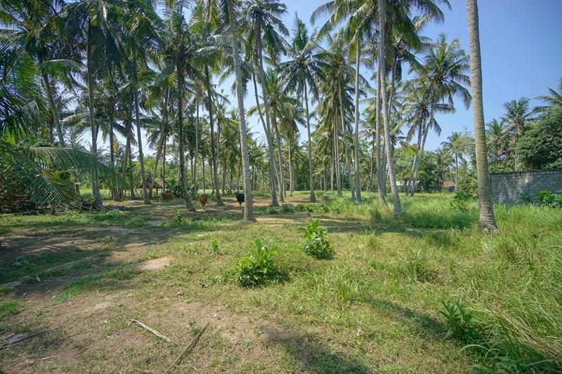 Good Land Close To Ubud Motivated Vendor Perfectly Shaped Land Ideal For Sub Division Could Also Be Taken As 10 Are Only The L Ubud Villa Land For Sale