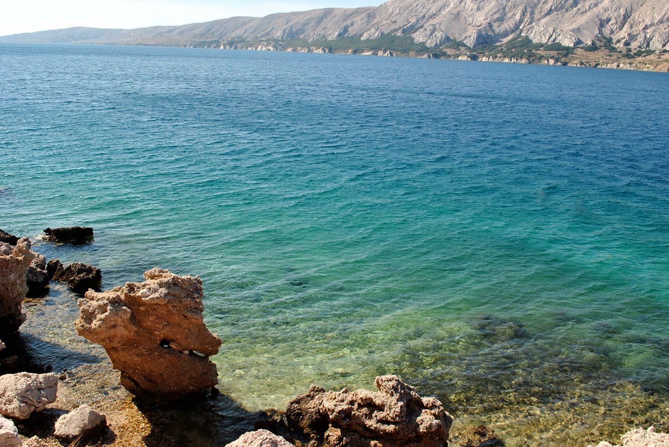 Île de pag Croatie mer hypocampe