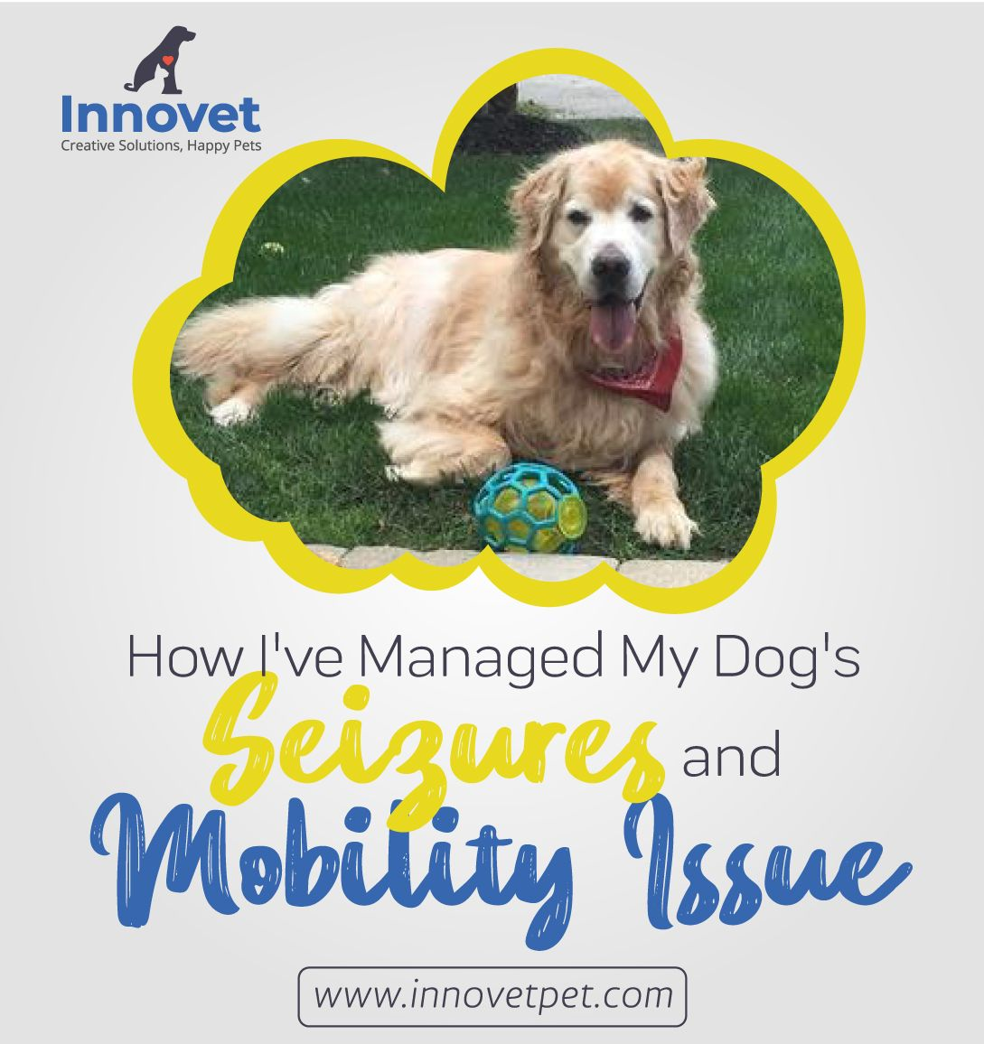 How I Ve Managed My Dog S Seizures And Mobility Issue Dog