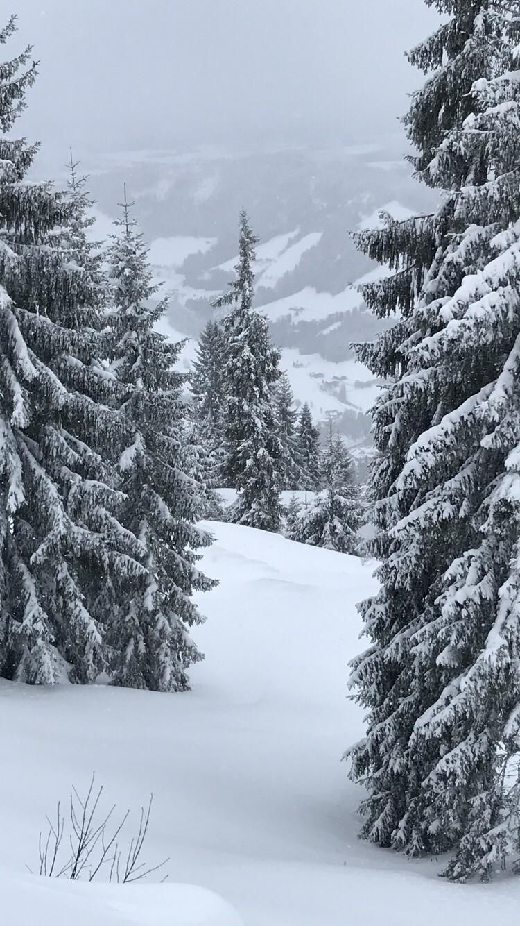 Snowy trees in Austria like a christmas card in 2020