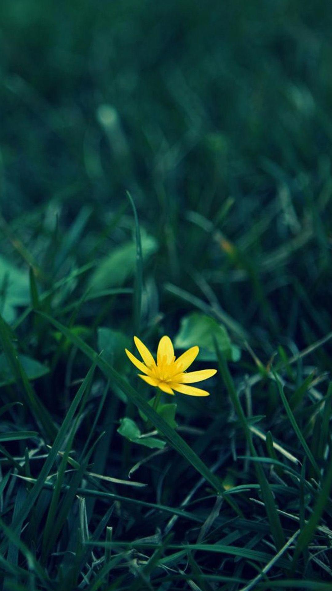 Nature Little Yellow Flower Green Grassland Blur Background IPhone 6 Pluswallpaper