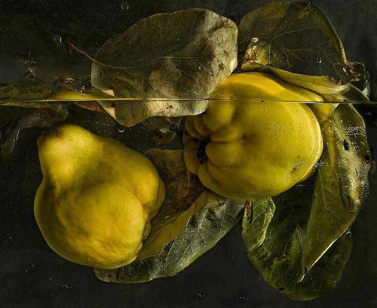 Membrillos,  Foto de Pilar Pequeño
