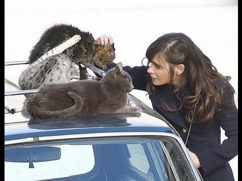 Zooey Deschanel & kitties on a car. | Community Post: 45 Amazing Pictures Of Celebrities And Cats