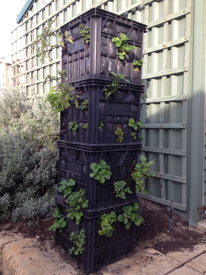 Vertical gardening recycled milk crates and less water for Vertical garden tower
