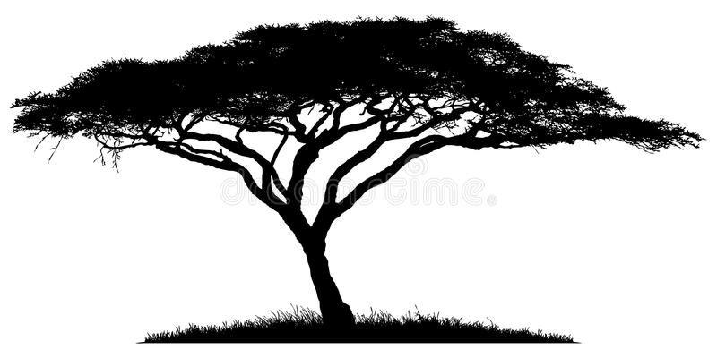 Silhouette Of The Tree Acacia Silhouette Of Acacia Wood African Savannah Affiliate Acacia Tree Silhouette African Tree Tree Drawing Tree Silhouette