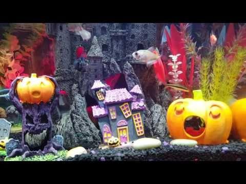 40 gallon Halloween 🎃 theme aquarium Aquariums Pinterest - halloween fish tank decorations