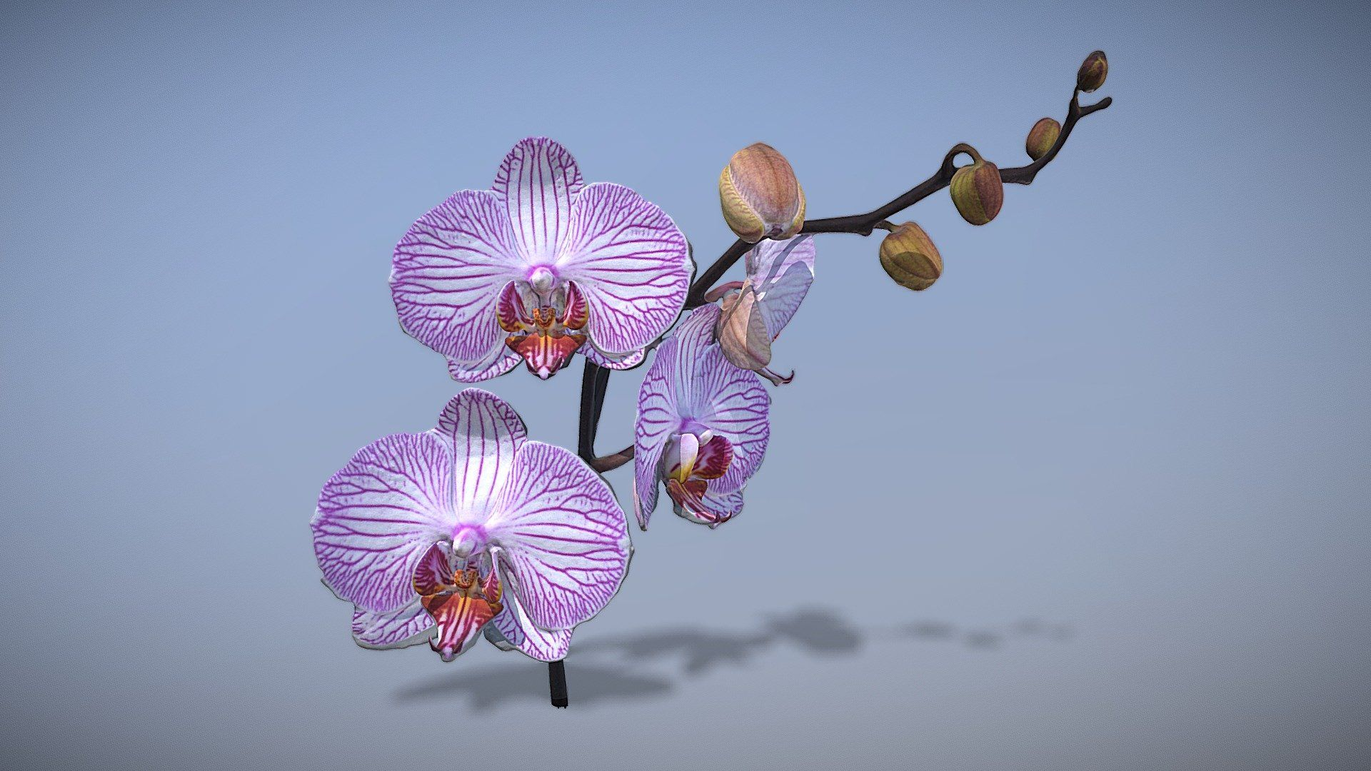 Orchid Flower By Thesidekick Orchid Flower Flower Download Orchids