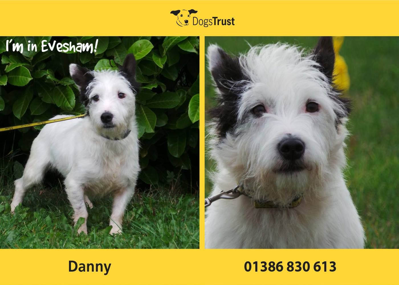 Danny At Dogs Trust Evesham Is A Terrified Little Dog Who Is So Worried About Everything Especially Movement Noise And Dogs Trust Little Dogs Dog Adoption