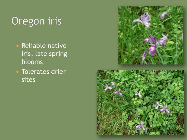 Native Plants To Oregon Part - 42: Native Plants For Oregonu0027S Willamette Valley