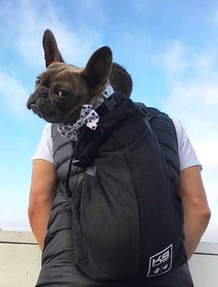 Best Dog Carrier Backpack Around The K9 Sportsack Frenchie