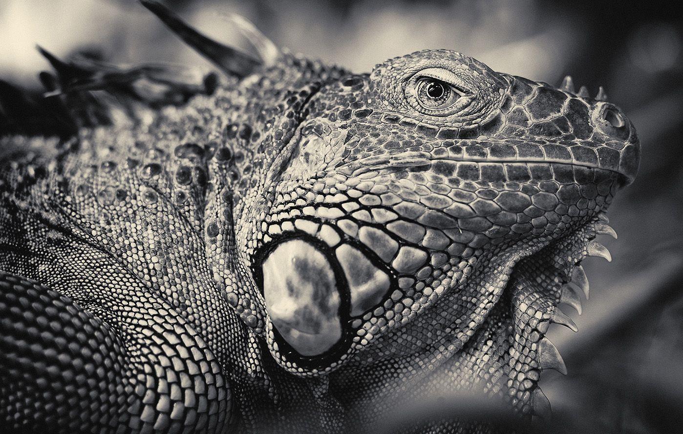 Photo By Antti Viitala Animals Pinterest Animal - Captivating black and white animal portraits by antti viitala