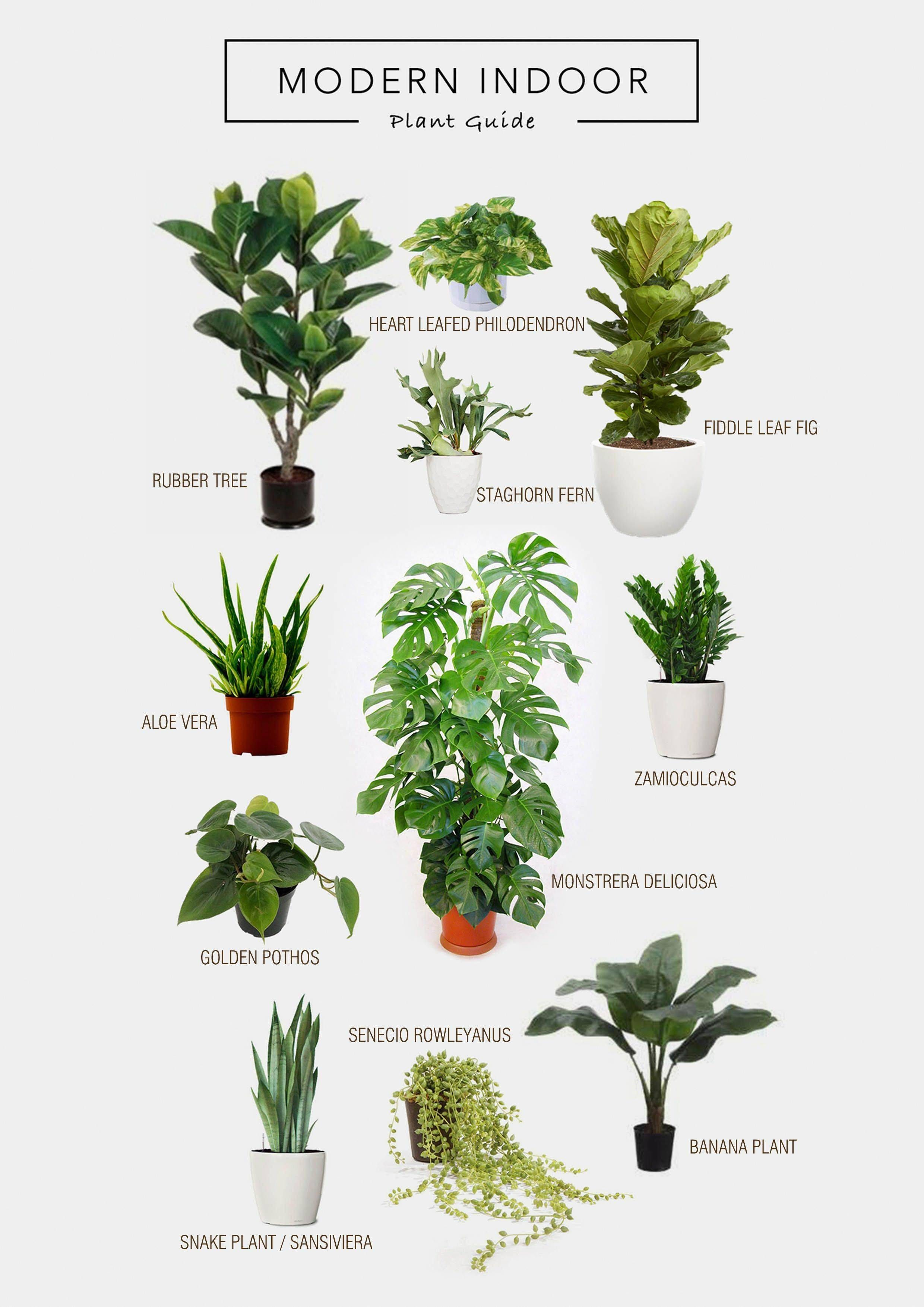 Non toxic House Plants for Cats More Image Visite #plantsindoor