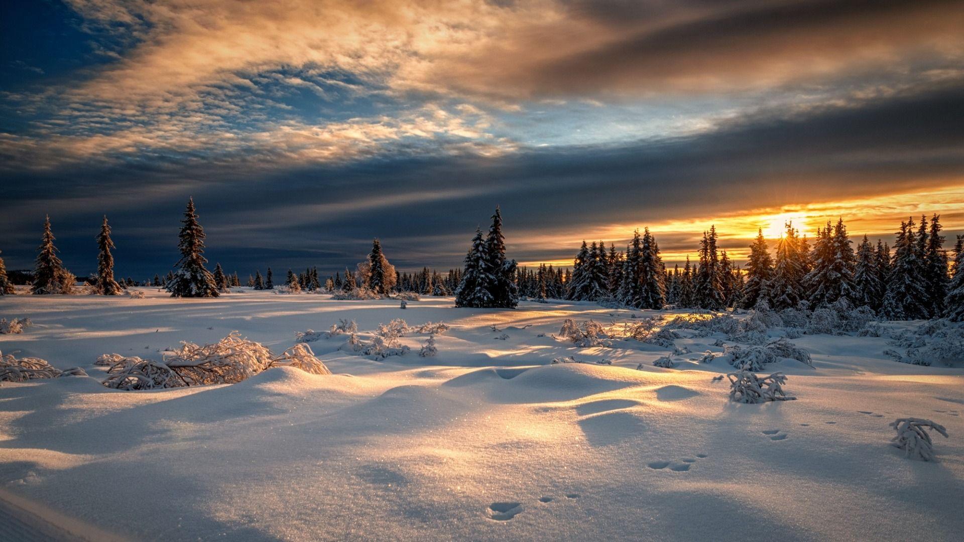 Free Winter Night Winter Images