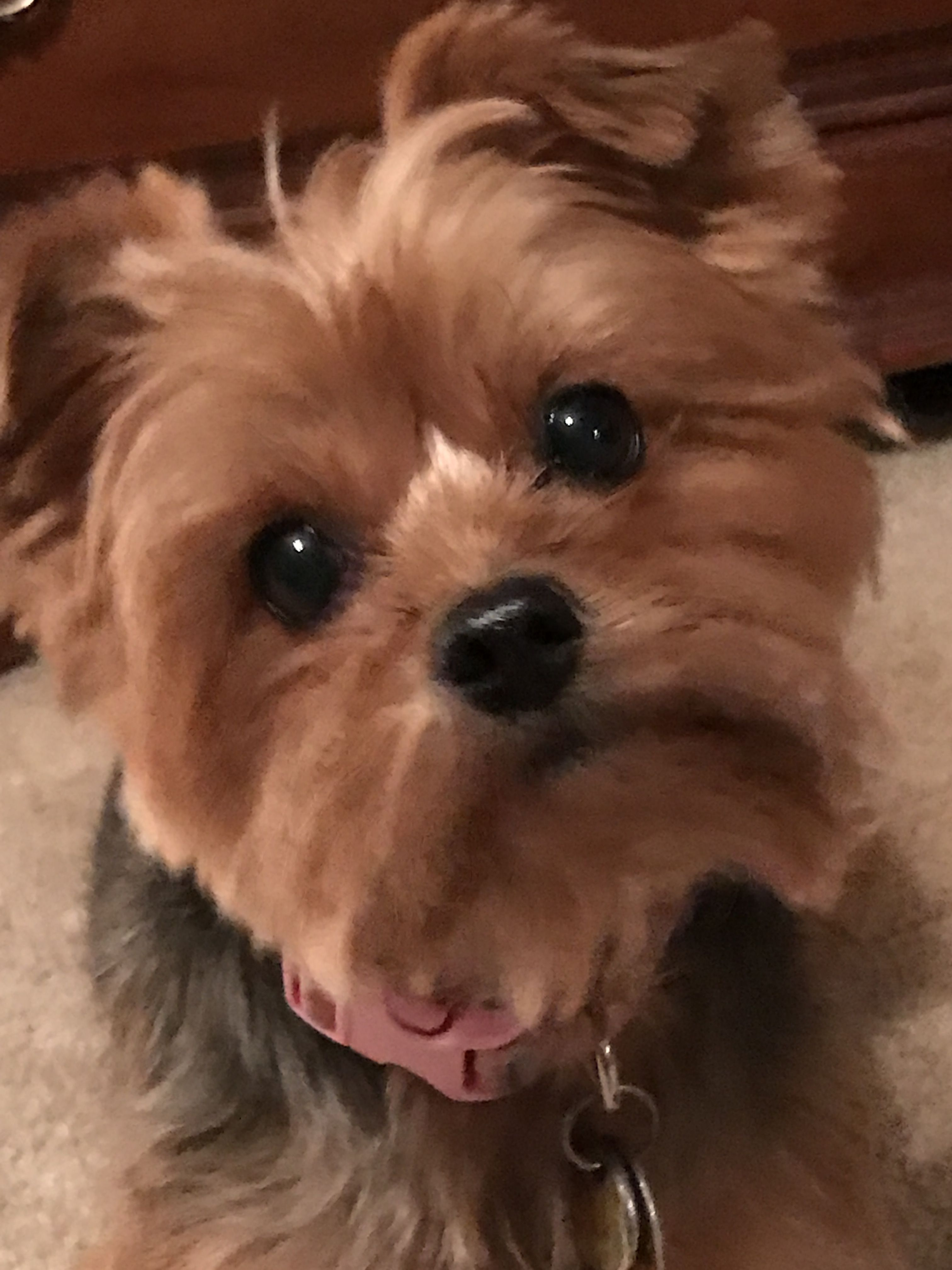 Adopt Madison On Retriever Dog Labrador Retriever Dog Gentle Baby