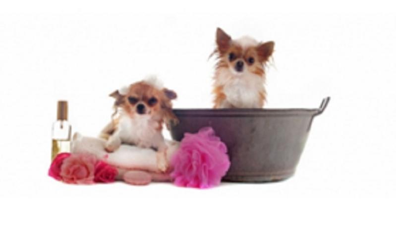 En verdecora encontrar todos los productos necesarios - Verdecora mascotas ...
