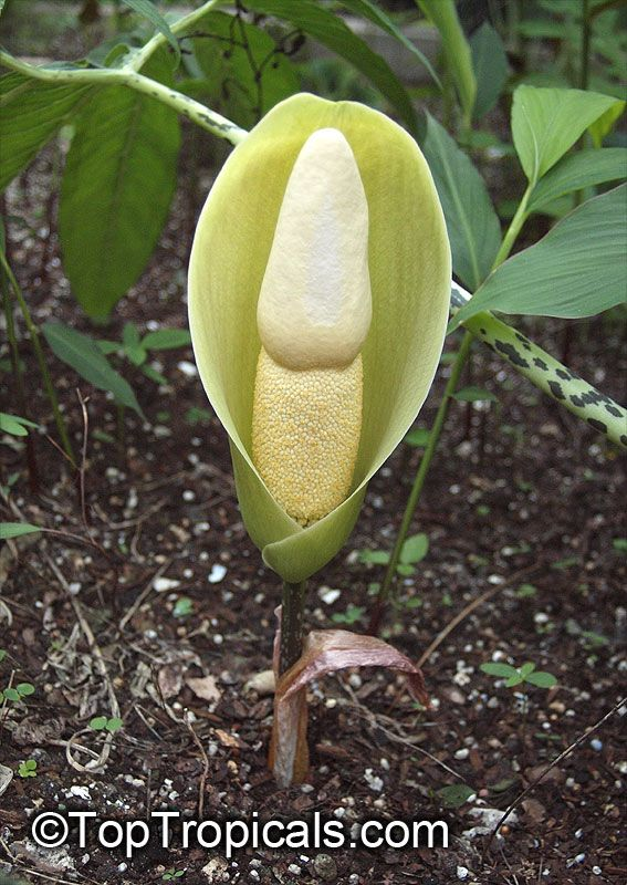 Pin On Artistic Garden