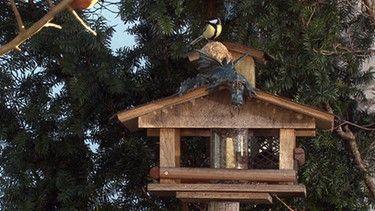 Vögel füttern   Bild: BR