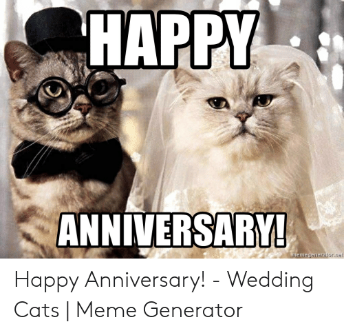 Happy Anniversary Cat Meme Anniversary meme, Happy