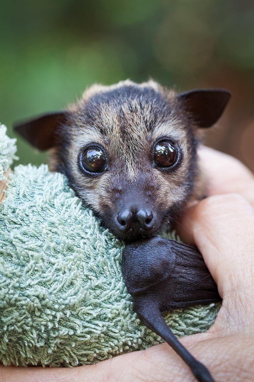 этом топ самых милых животных фото фото